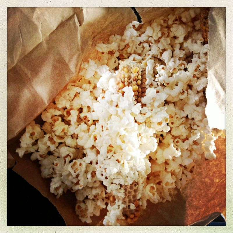 Popcorn on the cob just popped from Greenling