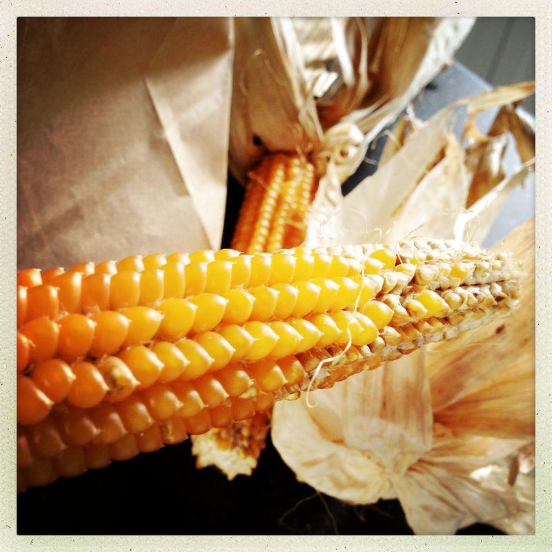 Greenling popcorn on the cob prep