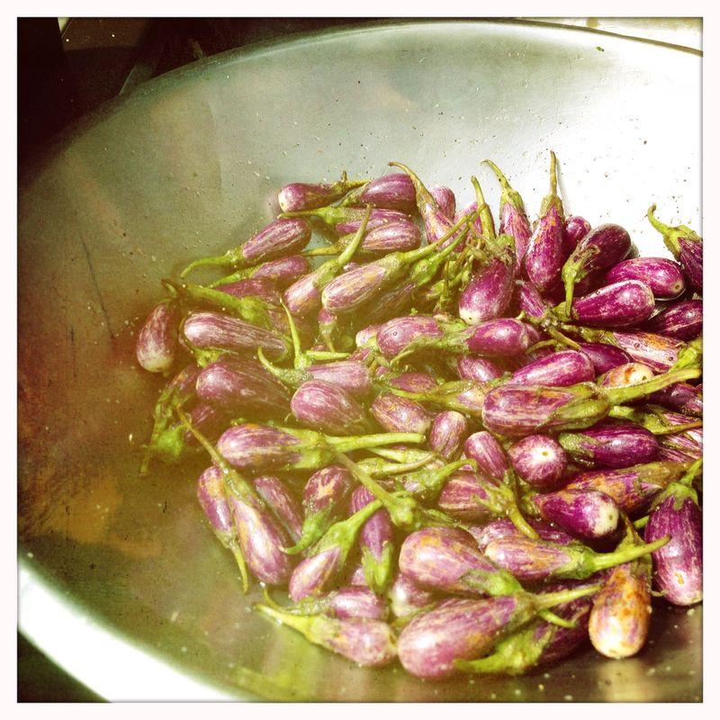 Eggplants Springdale Farm 052